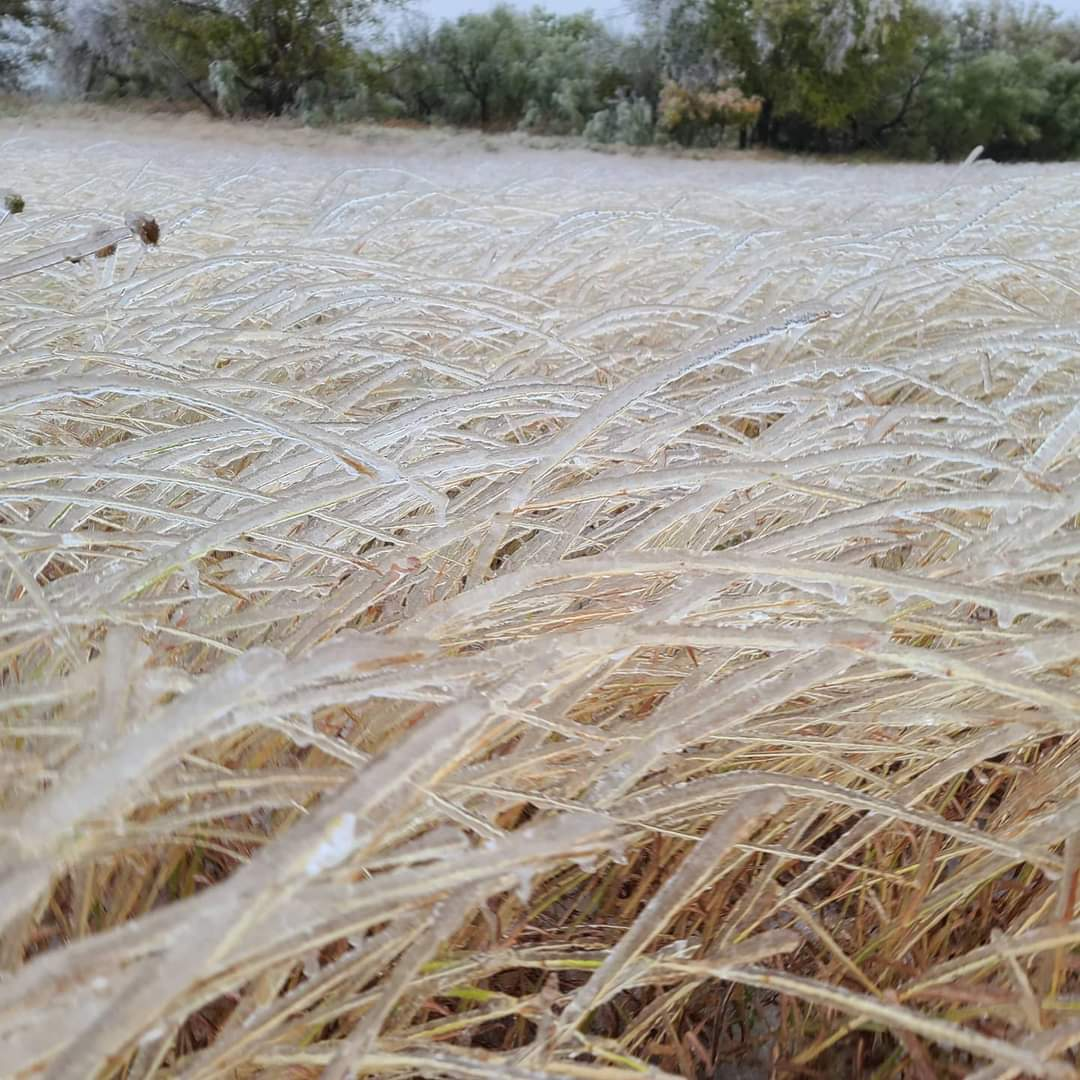 Ice covered grass near Childress Tuesday (27 October 2020). The picture is courtesy of Kasey Blacksher Smith via Farrah Holcomb.