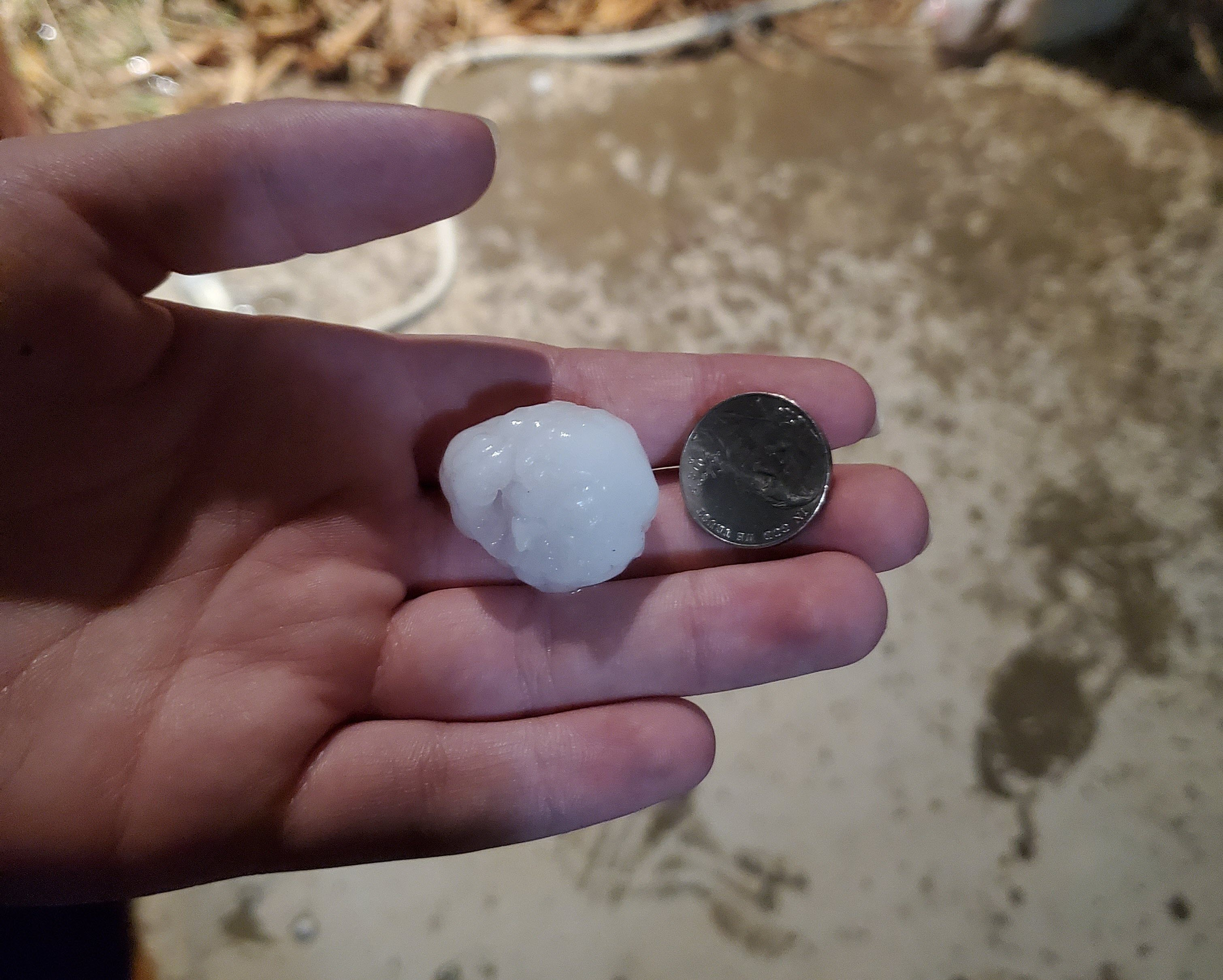 Hail that fell in Ralls Tuesday evening (29 December 2020). The picture is courtesy of @flutter_jul on Twitter.