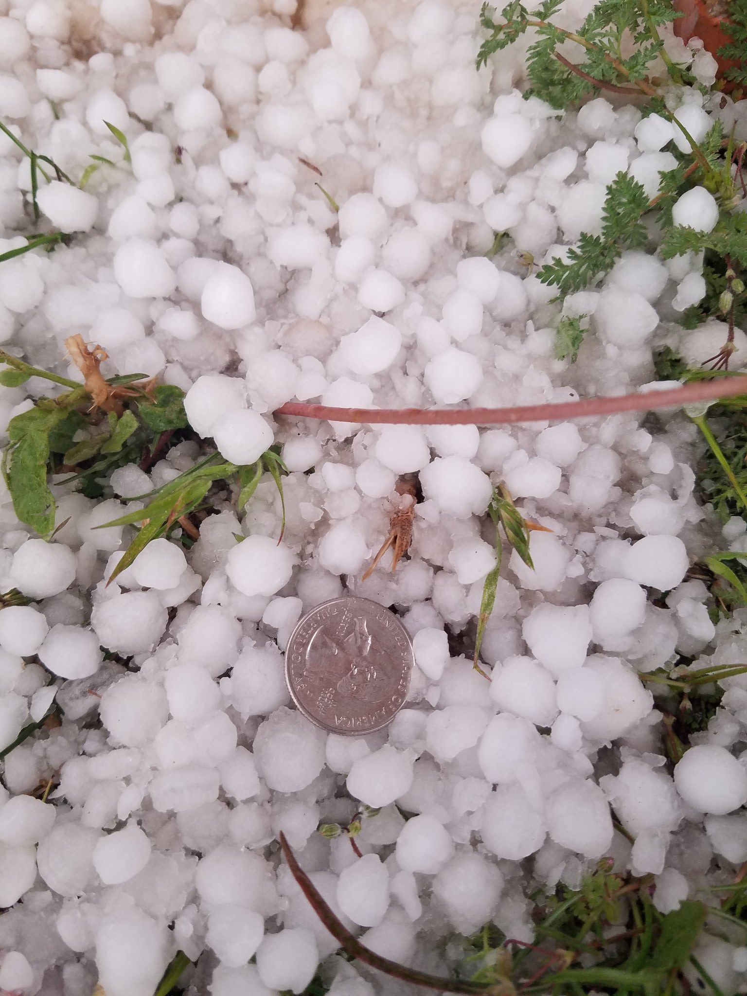 Small hail piled up in northwest Lubbock late Monday afternoon (22 March). The picture is courtesy of Jessie McDonald (@jmeso212).